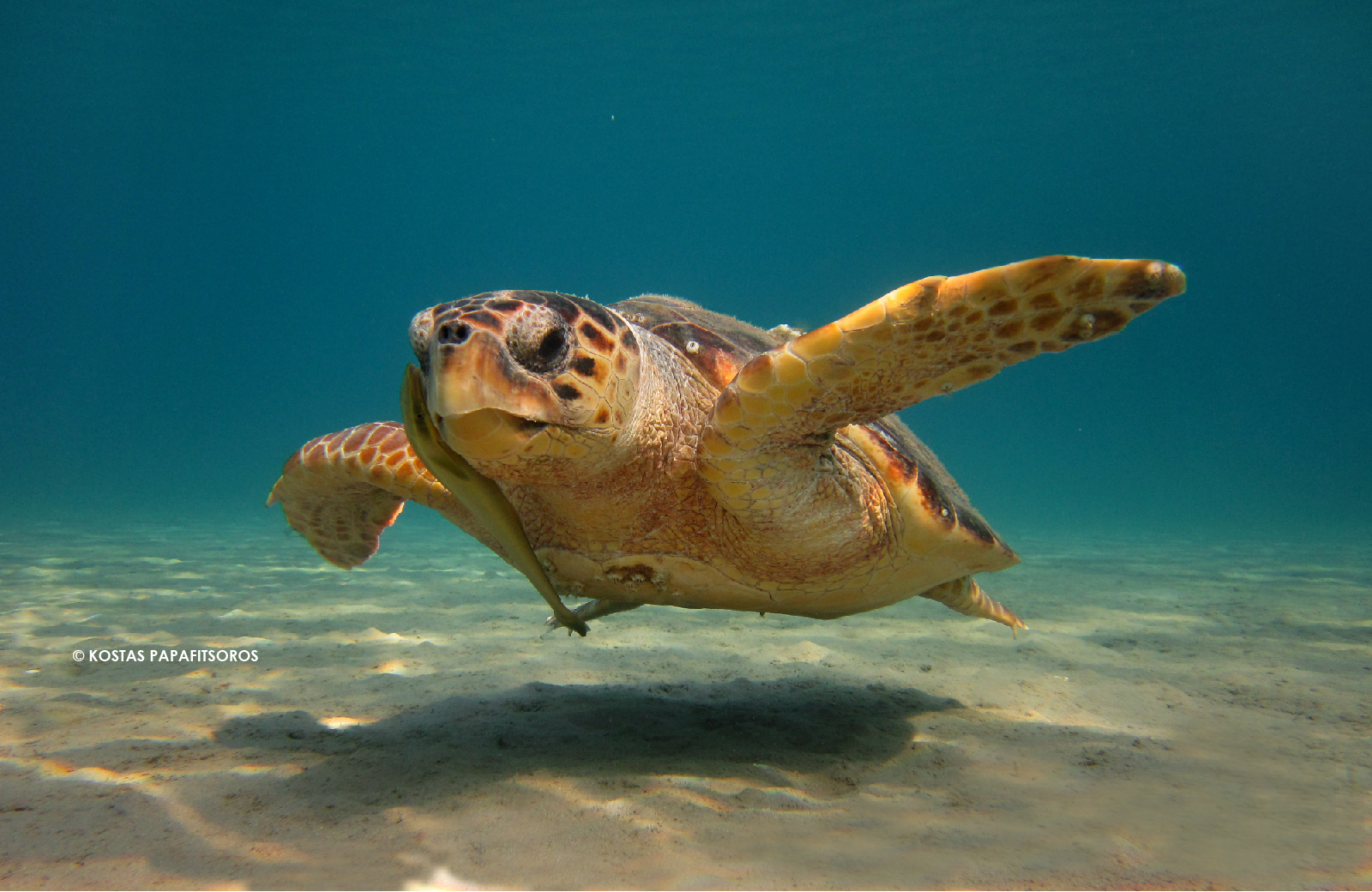 Download Images Of Turtles Background