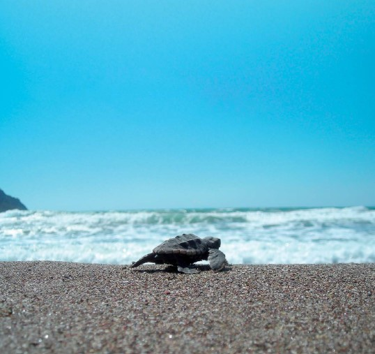 conservation_of_mediterranean_turtles_in_the_mediterranean_sea