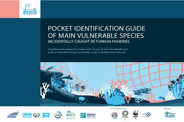 Pocket Identification Guides of Main Vulnerable Species Incidentally Caught!