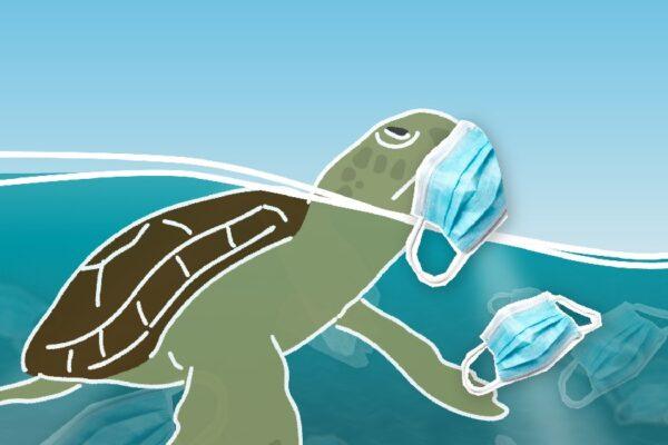 MEDASSET TV Spot 2020: No Turtle needs a mask!