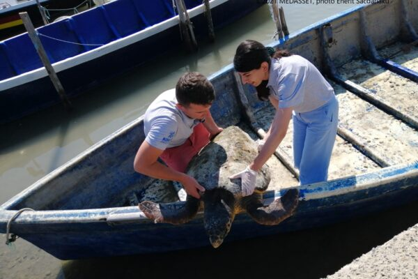 """""""Fighting"""" for turtles! A Story of Conservation from the Mediterranean!"""